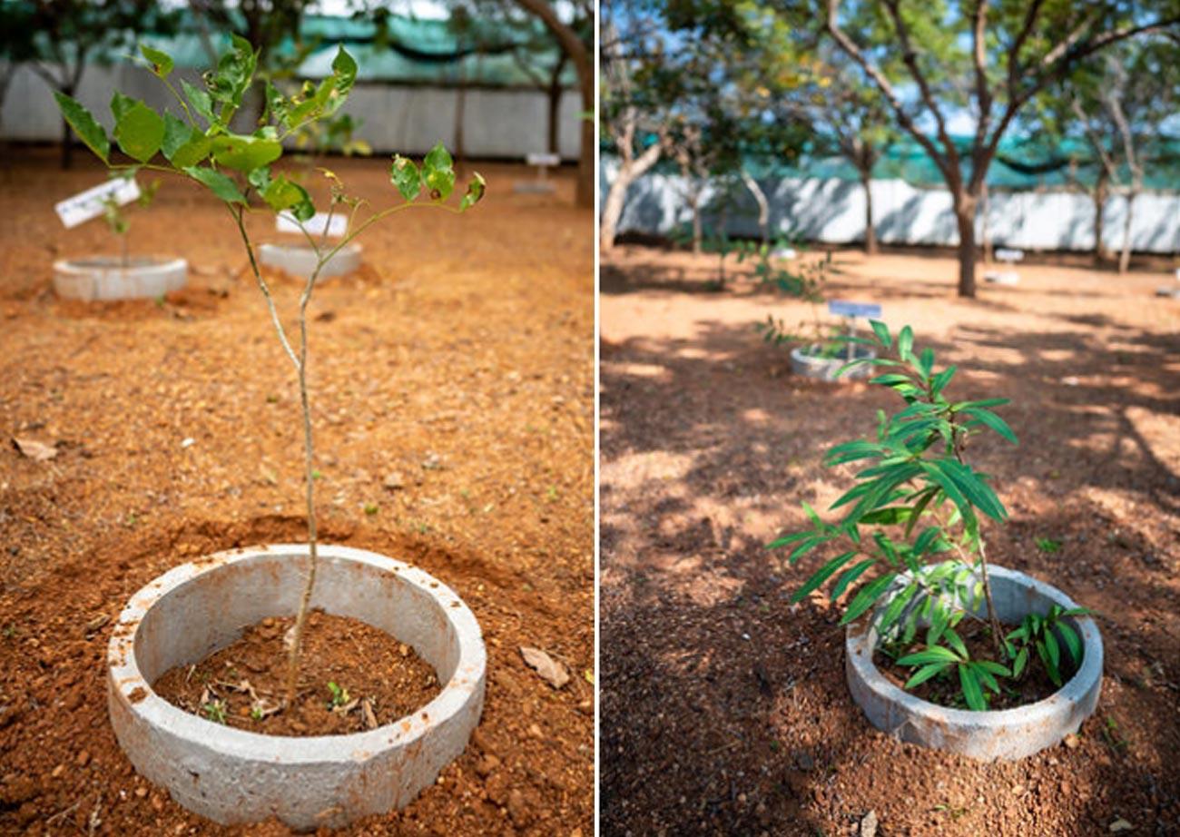 Greening the Planet